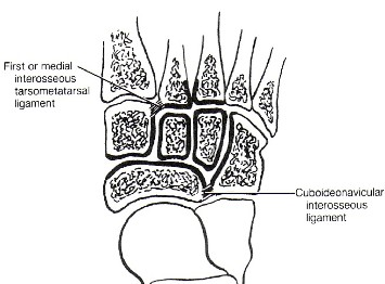 The great tarsal joint